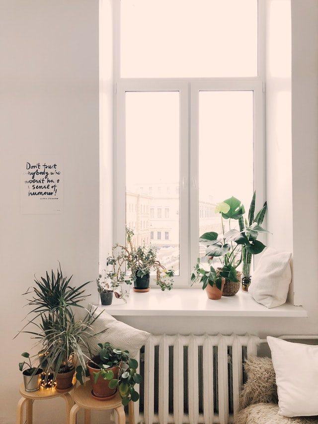 Ggreen-Leaf-Plants